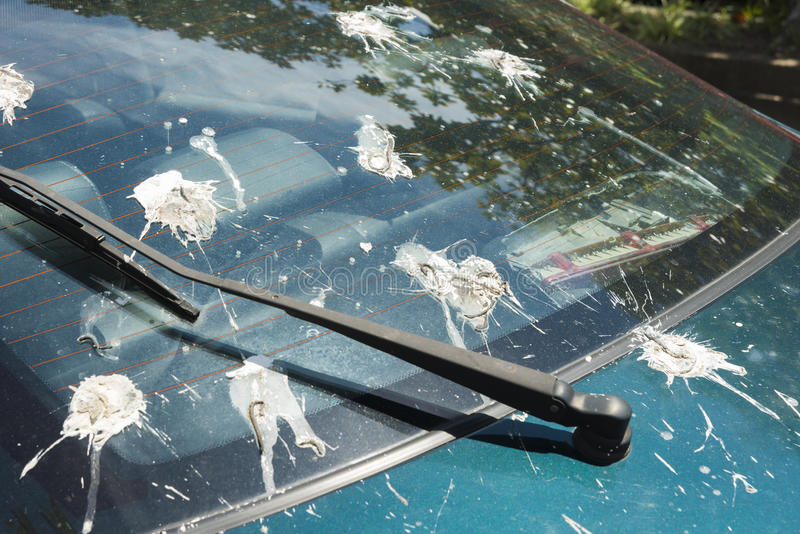 Close up Bird Droppings back window car royalty free stock photography