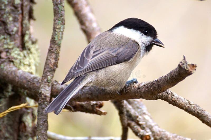 Close-up of Bird Perching Outdoors stock images