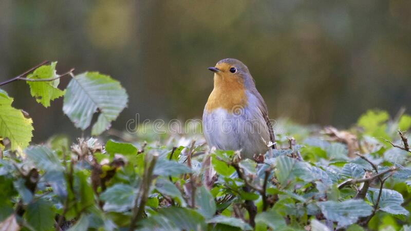 Close-up of Bird Perching on Plant royalty free stock image
