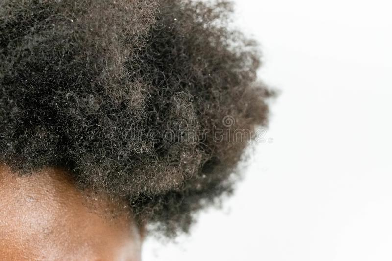 Close up of Black African American Woman`s Kinky curly hair in natural state isolated on white background for Black healthy hair c stock photography