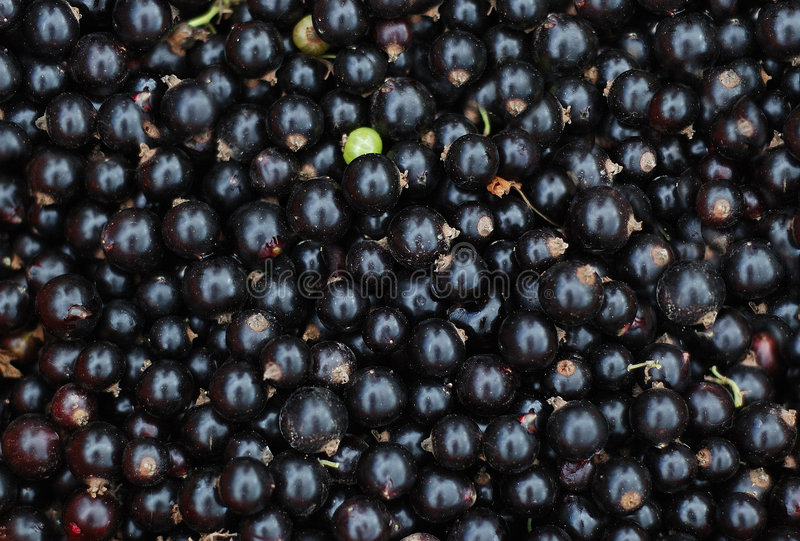 Close-up of black currants royalty free stock photos