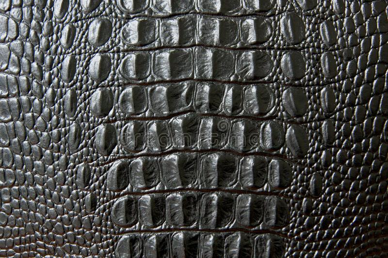 Close up of black snake or crocodile skin texture. large scales. stock photos