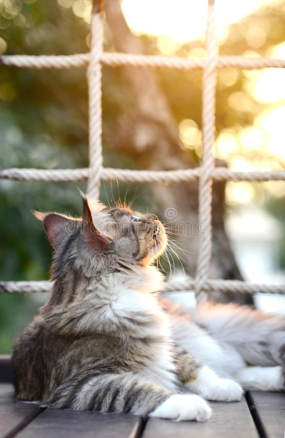 Close-up black and white tabby cat looking up in garden with soft light background has net behind. Cat in front of net. cat in sum stock photo