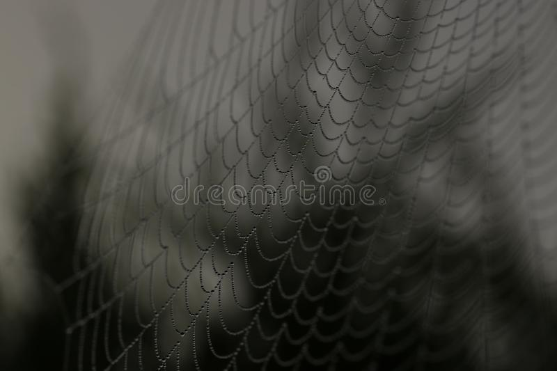 Close Up Of Black And White Web Free Public Domain Cc0 Image