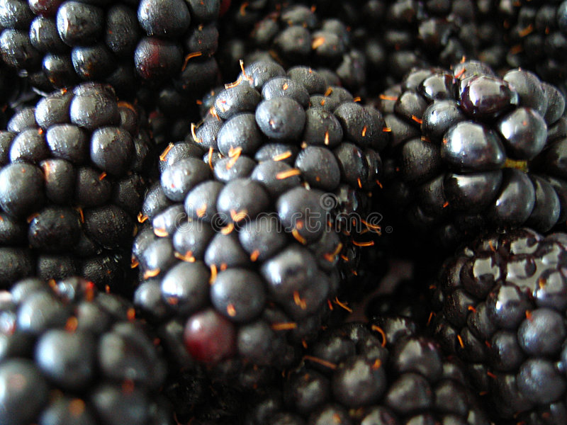 Close up of blackberries stock photography