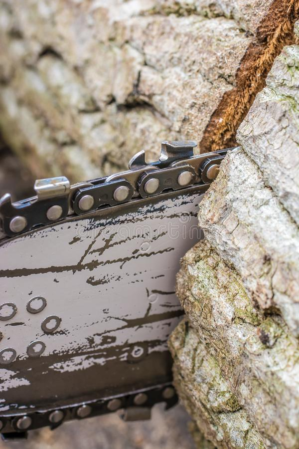 Saw blade of a chainsaw works its way through a tree trunk stock photo