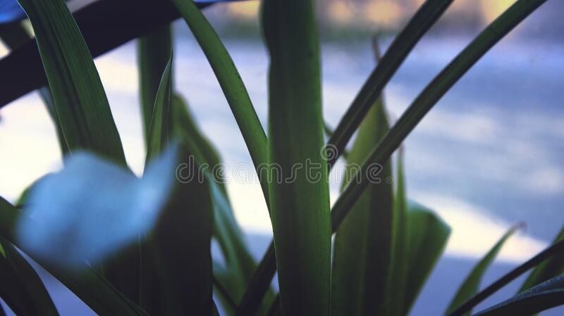 Close Up On Blades Of Grass Free Public Domain Cc0 Image