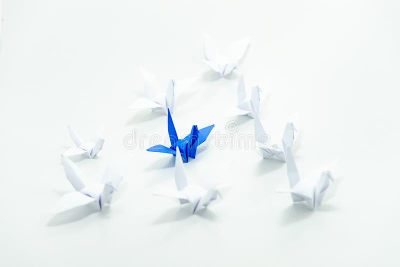 Close up blue bird flying different through a group of white bird,Leadership concept. stock photo
