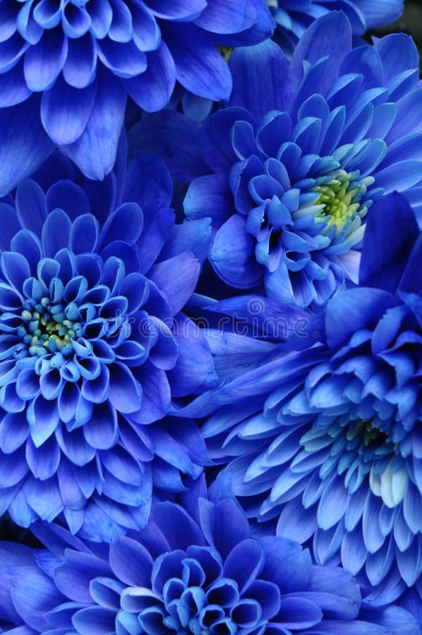 Close up of blue flower royalty free stock photos