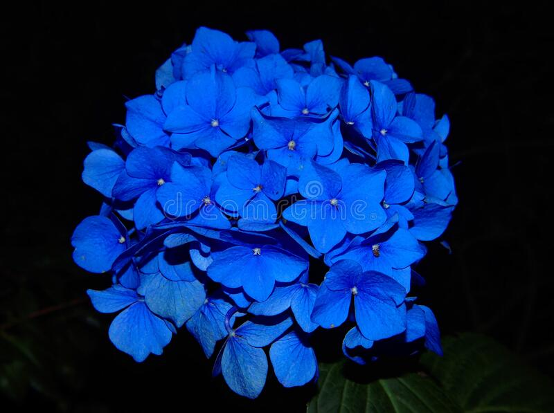Close up of blue flower royalty free stock photography