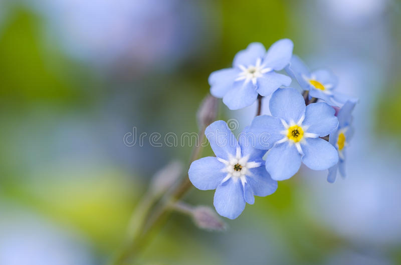 Close-up of a blue flower. Macro stock photos