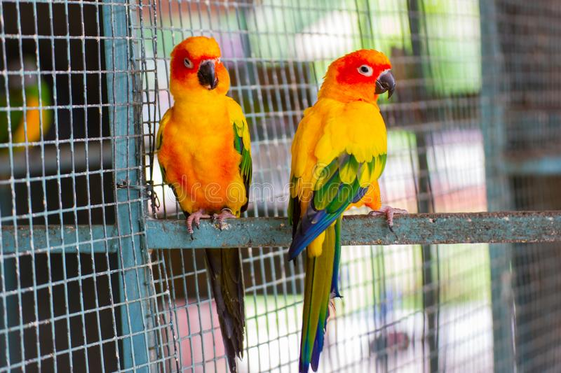 Close up Blue and yellow Macaw on a branch. At farm stock image
