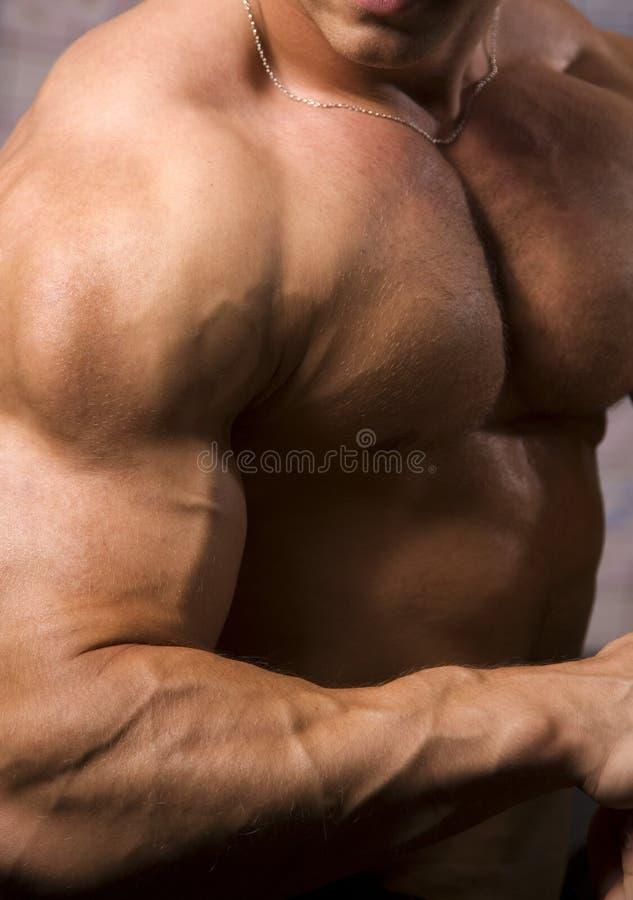 Download Close-up Of A Bodybuilder Torso Stock Photo - Image: 6036058