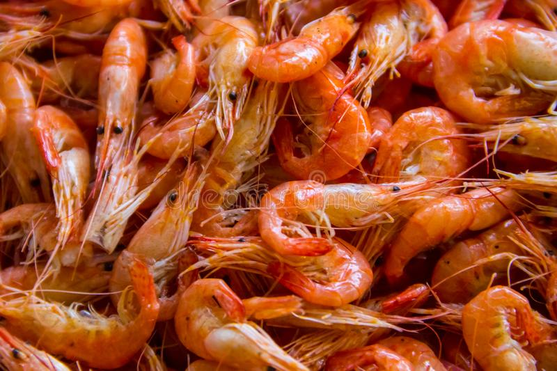 Close-up of boiled shrimps for background stock images