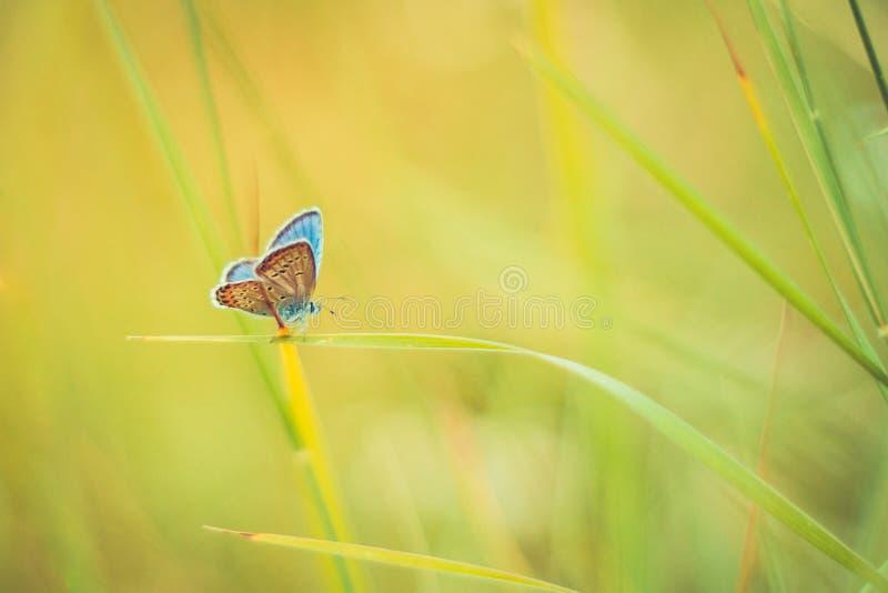 Close-up bonito da natureza, flores do verão e borboleta sob a luz solar Fundo calmo da natureza foto de stock royalty free