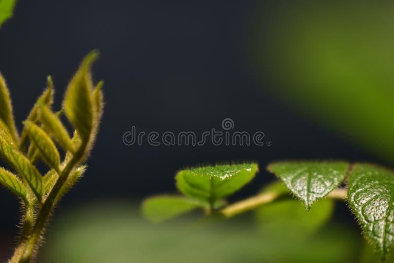 Close up bonito das folhas imagem de stock