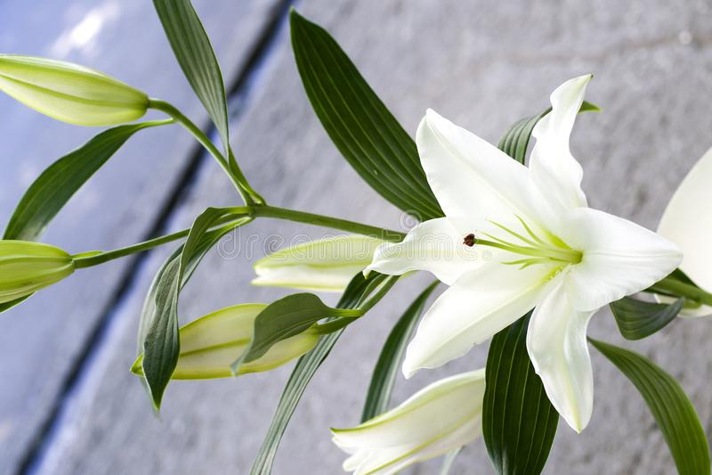Close-up bonito dos lírios em um ramalhete Um close-up pequeno do lírio branco fotografia de stock
