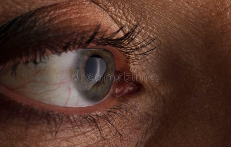 Close-up bonito dos olhos com a fotografia macro das pestanas longas, quarenta anos positiva imagem de stock royalty free