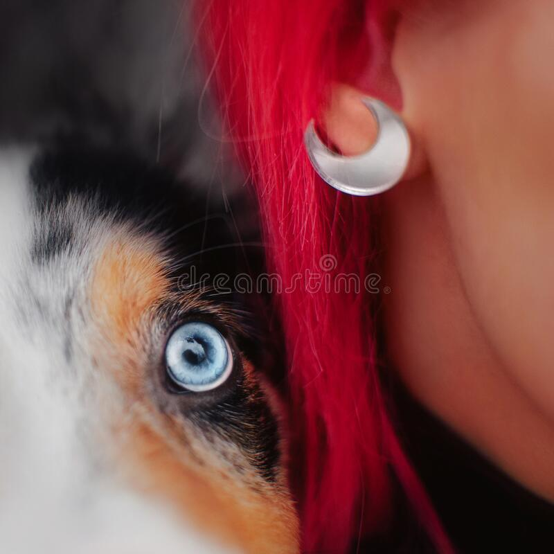 Close up of a border collie dog eye and owner earring stock images
