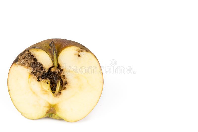 Close up Boring trace of a codling moth Cydia Pomonella, in a half wormy apple. On white background. Close-up Boring trace of a codling moth Cydia Pomonella, in royalty free stock photo