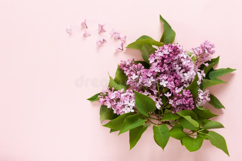 Close up of Bouquet of fresh fragrant pink lilac on  pink paper background royalty free stock photo