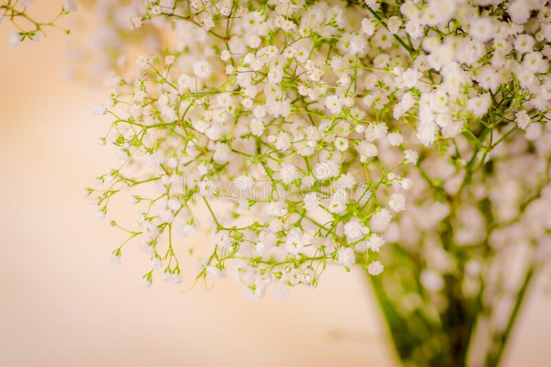 Close up of a bouquet of Lismachia foliage variety, studio shot, white flowers royalty free stock image