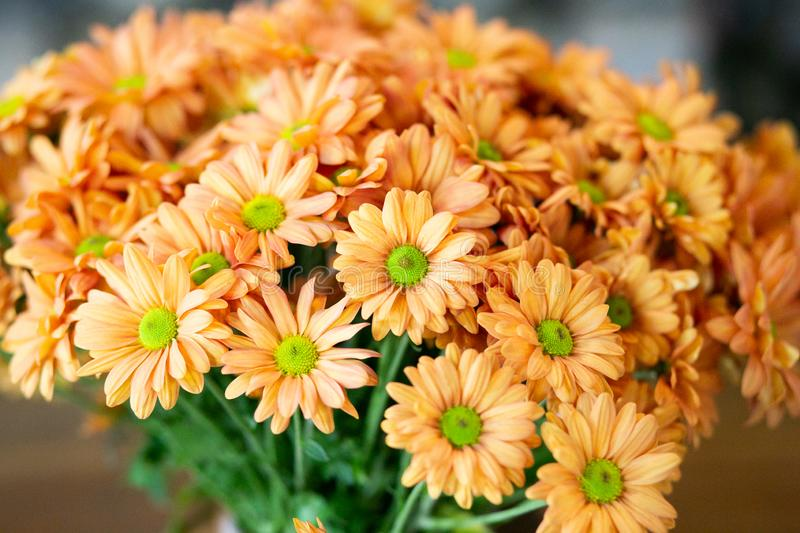 Close up Bouquet Many Flowers Orange Chrysanthemums stock image