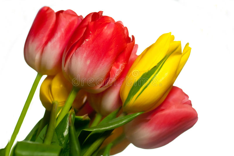Close Up Of Bouquet Of Pink And Yellow Tulips Royalty Free Stock Photos