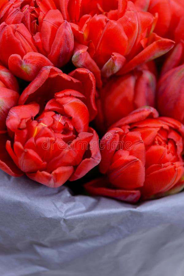 Close-up bouquet red tulips stock photo