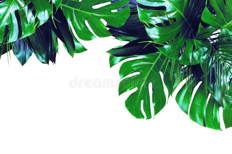 Close up of bouquets of various dark green fresh tropical leaves on white background stock images