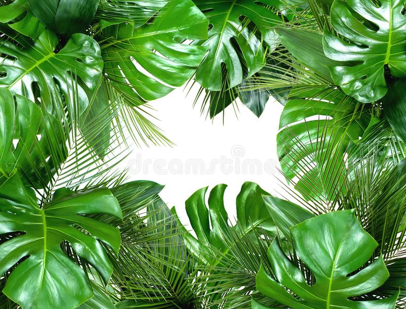 Close up of bouquets of various fresh tropical leaves on white b stock image