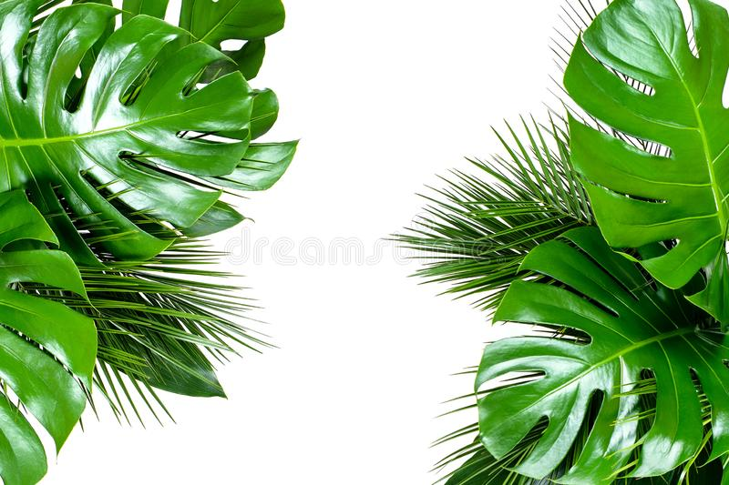 Close up of bouquets of various fresh tropical leaves on white background royalty free stock photos