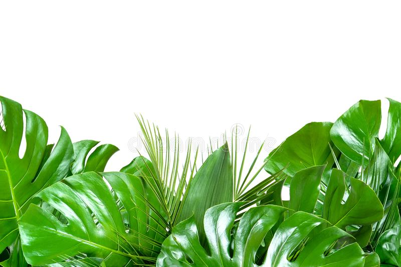 Close up of bouquets of various fresh tropical leaves on white background stock photo