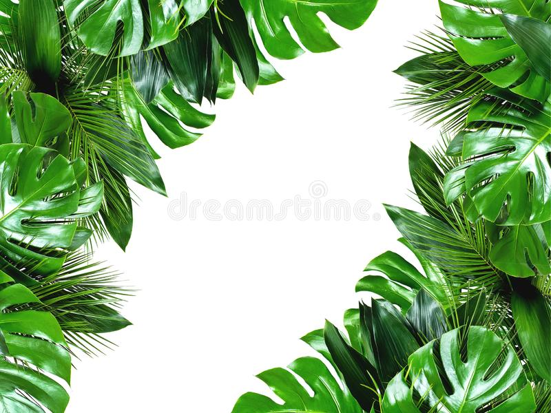Close up of bouquets of various fresh tropical leaves on white background stock photography
