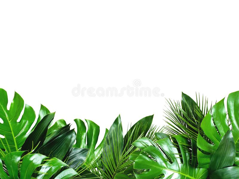 Close up of bouquets of various fresh tropical leaves on white background royalty free stock photography