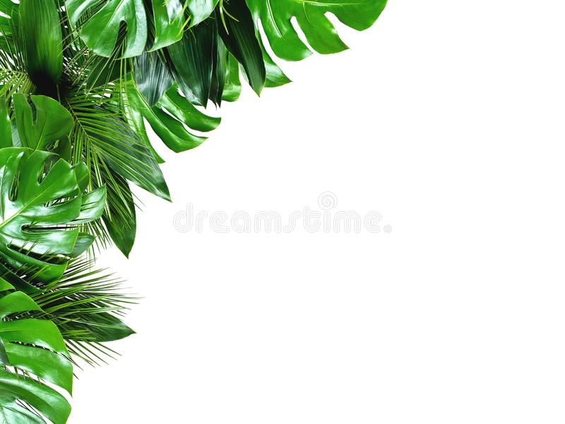 Close up of bouquets of various fresh tropical leaves on white background. Close up of bouquets of various green fresh tropical leaves isolated on white stock photo