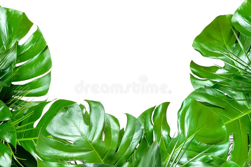 Close up of bouquets of various fresh tropical leaves on white background stock images