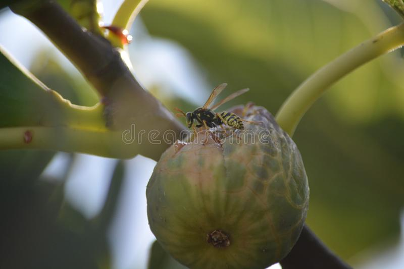 Close Up, Branch, Insect, Plant Stem royalty free stock photos