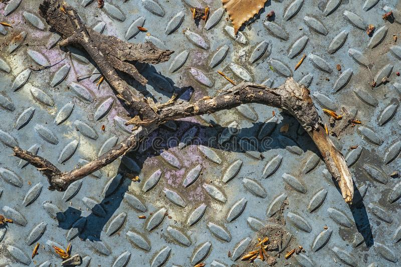 Branch and metal plate in a forest. Close up of a branch on a metal plate abandon in a forest stock photography
