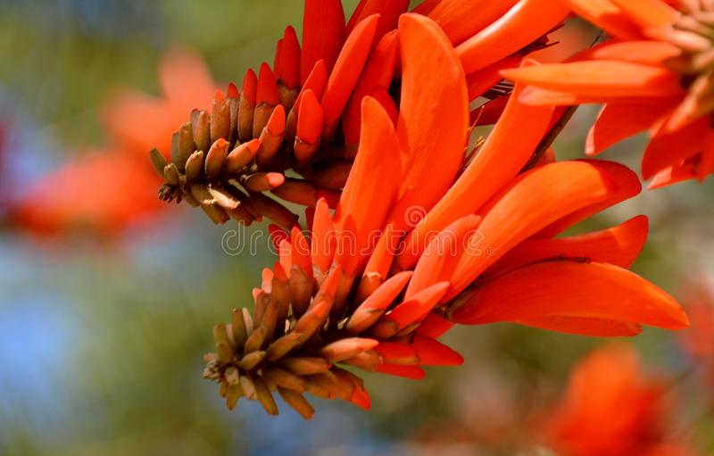Exotic scarlet flowers stock photo