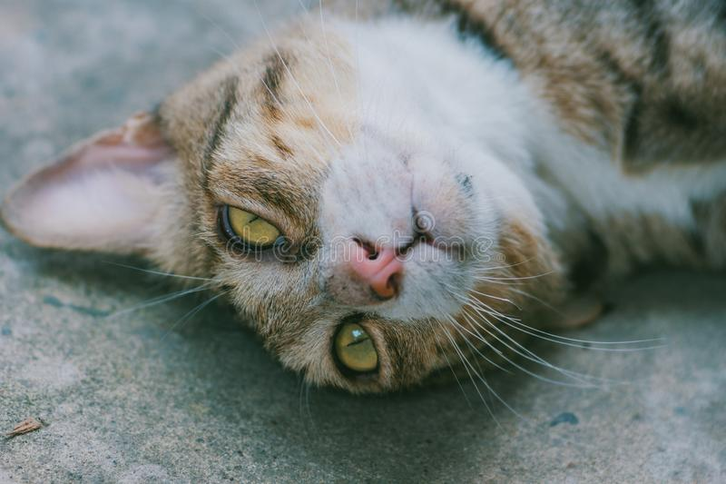 Close-up of brown Cat Lying on Grey Pavement stock image