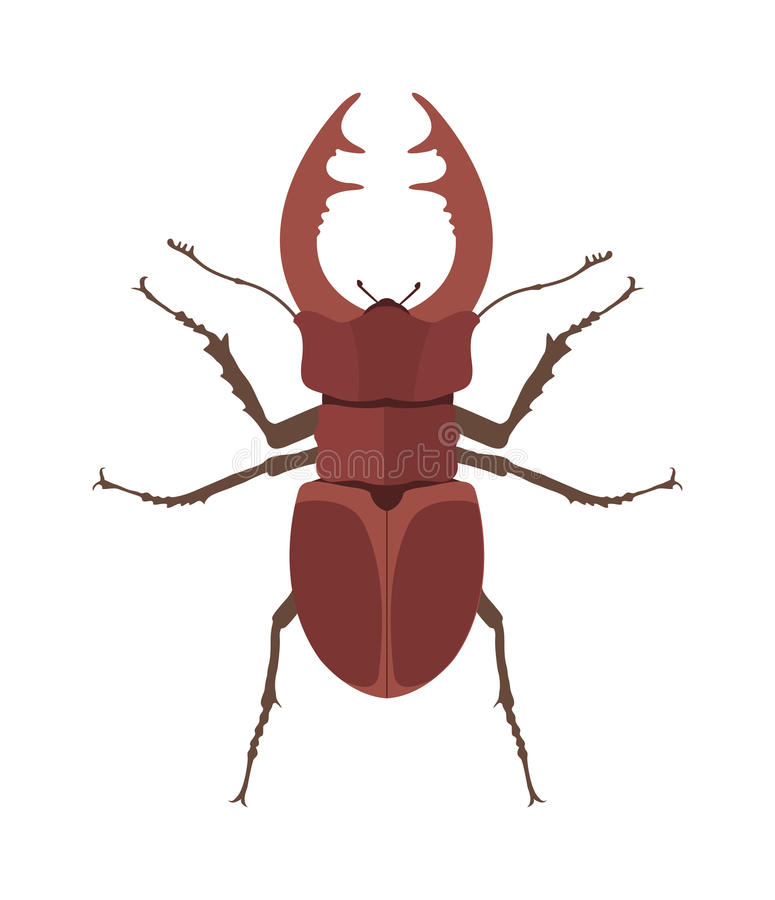Free Close Up Brown Horned Beetle Cartoon Vector Illustration. Rhino Bug Insect. Stock Photo - 68254600