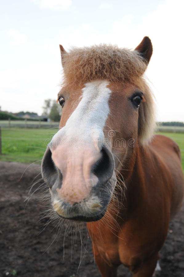 Close Up Of A Brown Horse Stock Images
