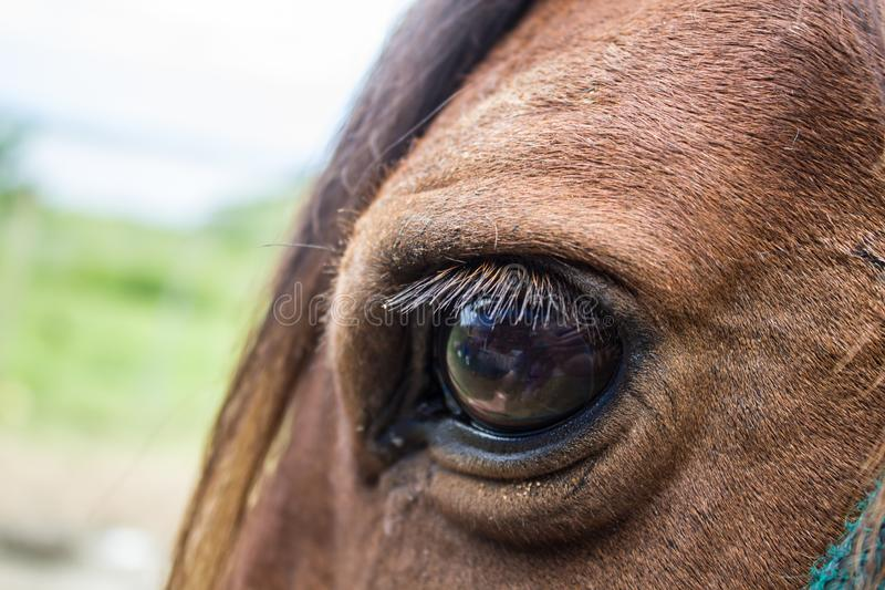 Close up of brown horse eye on sunny day. Animal bay beautiful beauty black body breed close-up closeup competition concentration detail domestic equestrian royalty free stock photos