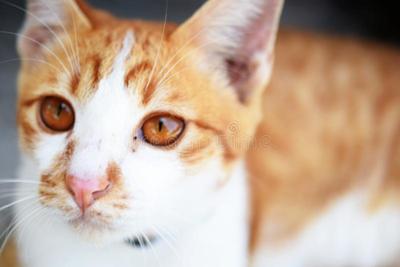 Brown orange tabby cat lying on the floor. Close up of brown orange tabby cat lying on the floor stock image