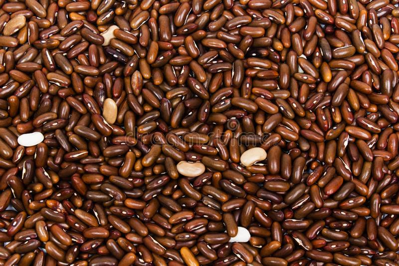 Close up brown red beans background. royalty free stock image