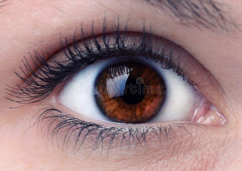 Close up of a brown woman eye stock photos