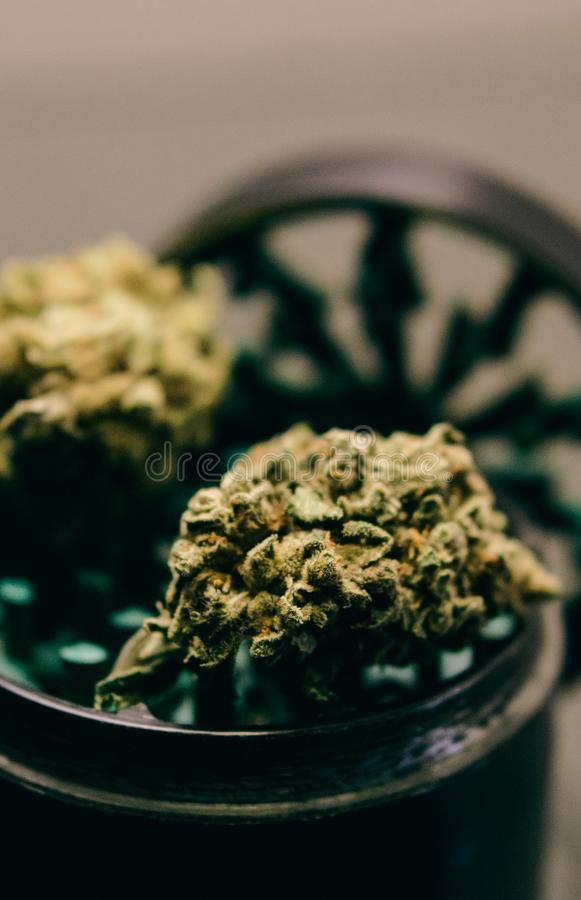 NClose-up of buds of marijuana lying on a metal grinder. Insta size for publication in stories royalty free stock photography