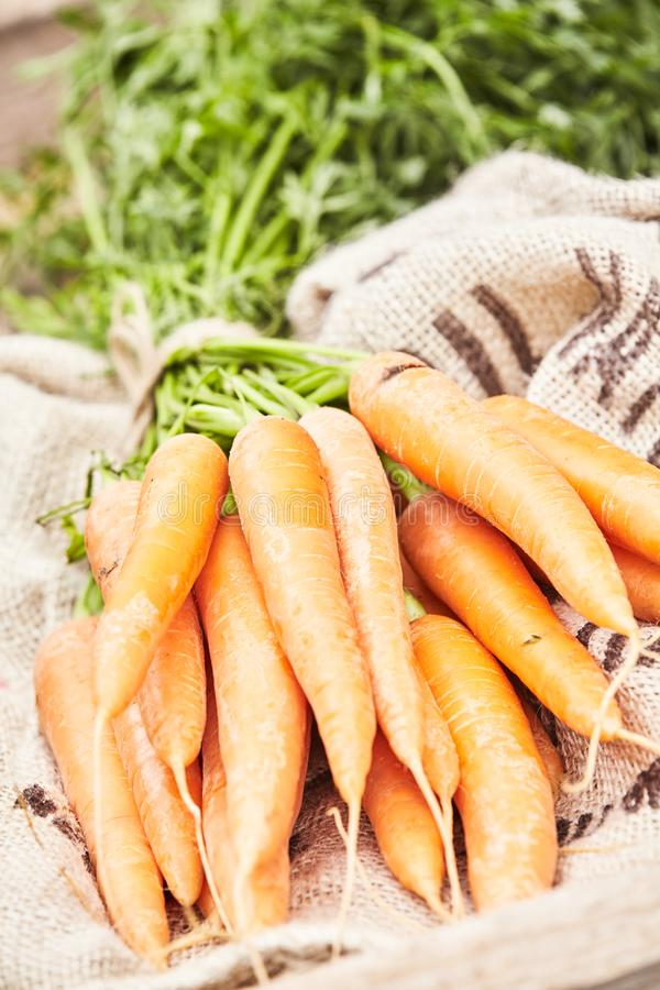 Close up on a bunch of washed fresh young carrots royalty free stock photo
