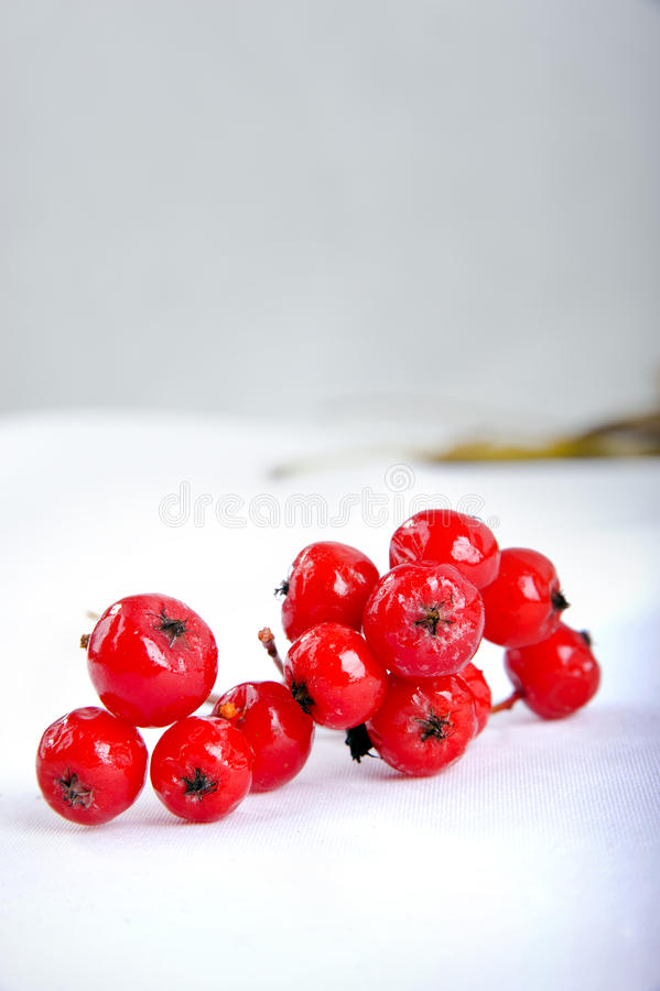 Download Close Up Of Bunches Of Rowan Berries Stock Photo - Image: 16833378